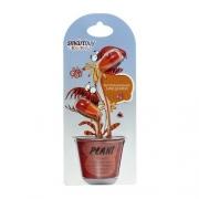 Наушники SmartBuy Plant Red/Orange